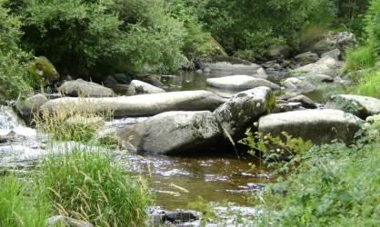 Rivière à truite en Lozère