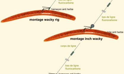 montage wacky rig et ses variantes