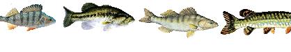 filtre à leurre poissons